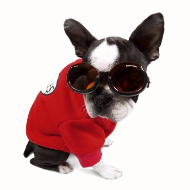 thumb_doggles-ils-dog-goggles-frenchy_adaptiveResize_390_390.jpg