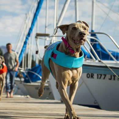 thumb_Ruffwear-Float-Coat-Front_adaptiveResize_390_390.jpg