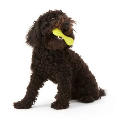 thumb_west-paw-design-hurley-doodle_adaptiveResize_390_390.jpg