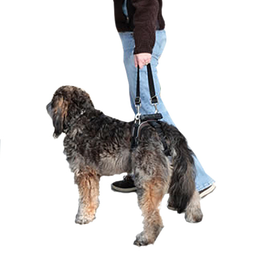 The CareLift Harness can improve your dog's mobility