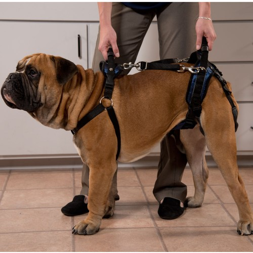 Improve your dog's mobility with the CareLift Full Harness
