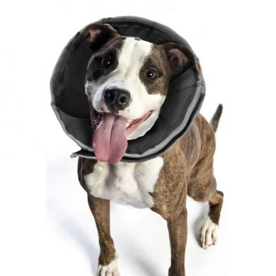 thumb_ZenPet-ProCone-Staffy_adaptiveResize_390_390.jpg