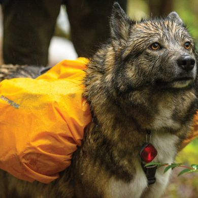 thumb_ruffwear-saddlebag-cover-close-wolf_adaptiveResize_390_390.jpg