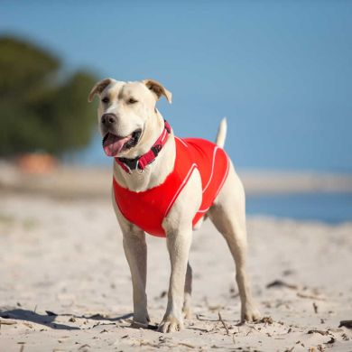 thumb_ezydog-dog-rashie-sun-protection-front_adaptiveResize_390_390.jpg