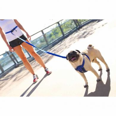 thumb_ezydog-road-runner-leash-pug_adaptiveResize_390_390.jpg