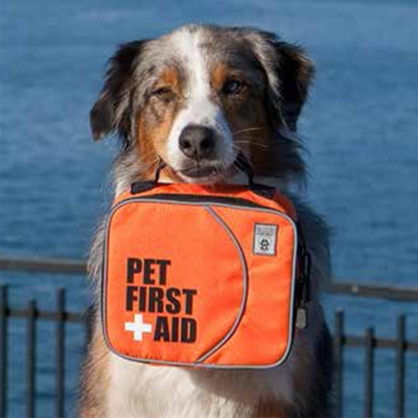 Pet First-Aid | Critical Care Training | American Heart ... |First Aid For Pets Files