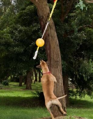 thumb_aussie-dog-home-alone-jump_adaptiveResize_390_390.jpg
