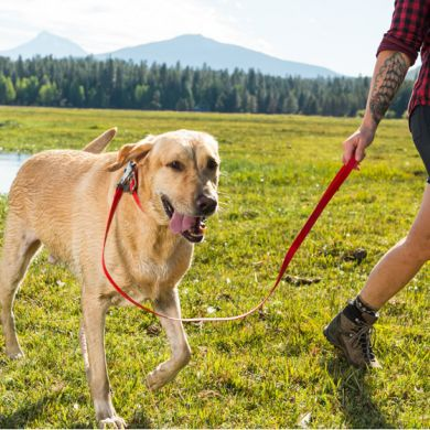 thumb_Ruffwear-Headwater-Leash-On-Lead_adaptiveResize_390_390.jpg
