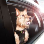 Ezydog-Drive-Harness-Car-Window.jpg