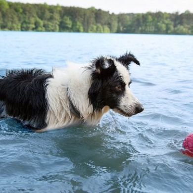 thumb_Boz-dog-ball-floats-in-water_adaptiveResize_390_390.jpg