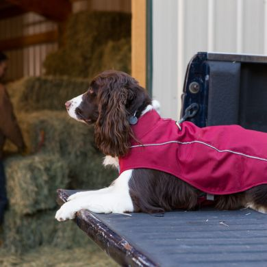 thumb_ruffwear-k9-overcoat-purple-truck_adaptiveResize_390_390.jpg