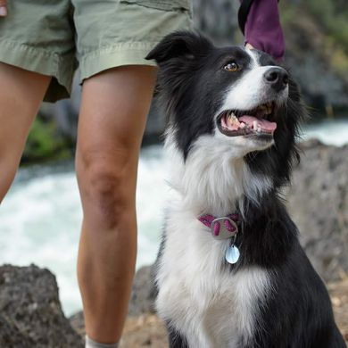 thumb_ruffwear-knot-a-collar-border-collie_adaptiveResize_390_390.jpg