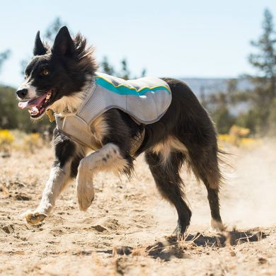 thumb_Ruffwear-Swamp-Cooler-Running_adaptiveResize_390_390.jpg
